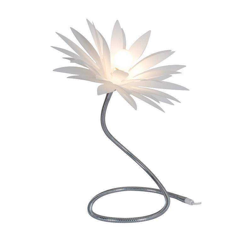 Tischleuchte Young Living – Blume, Näve online kaufen