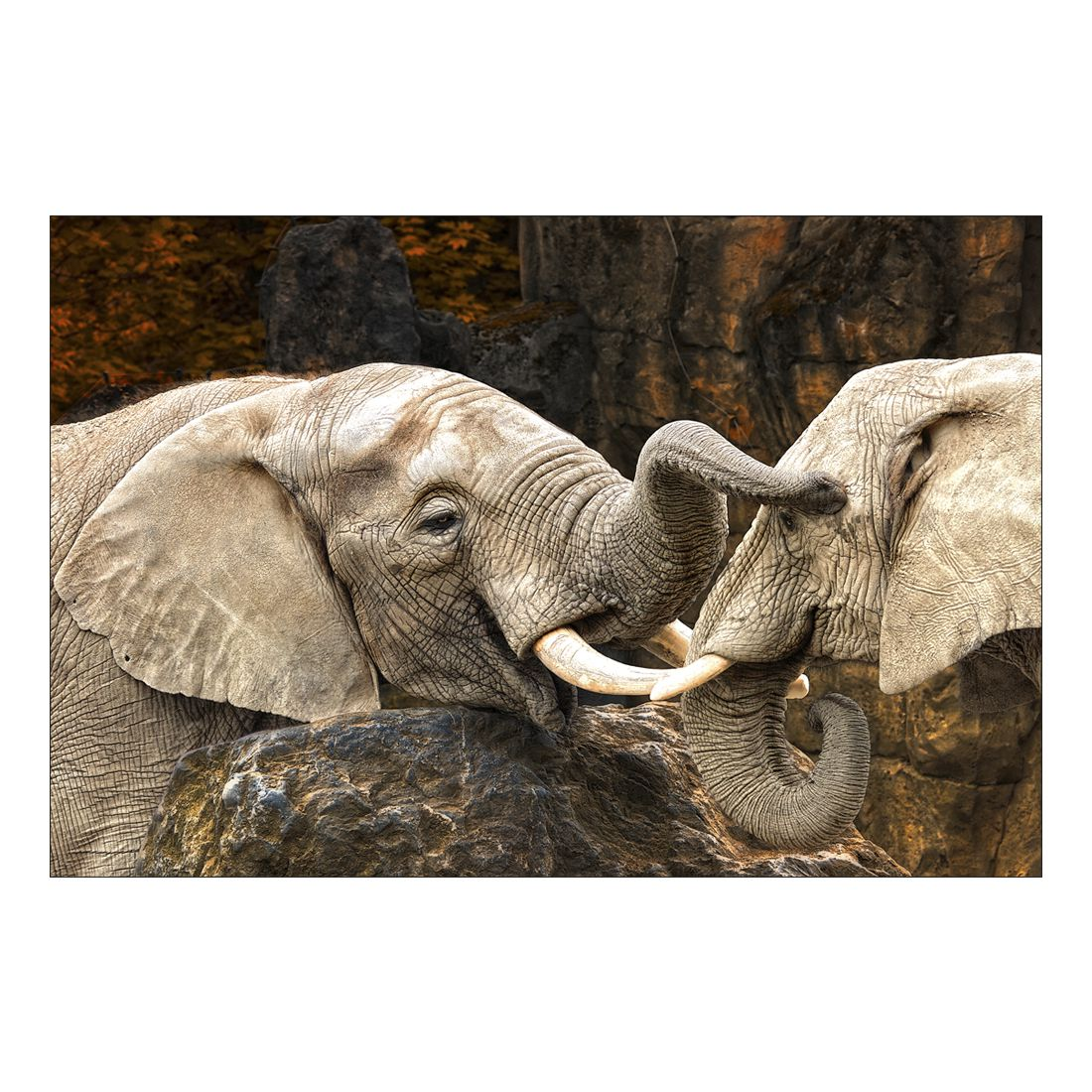 Acrylglasbild Elephant Friendship – Abmessung 90×60 cm, Gallery of Innovative Art jetzt kaufen