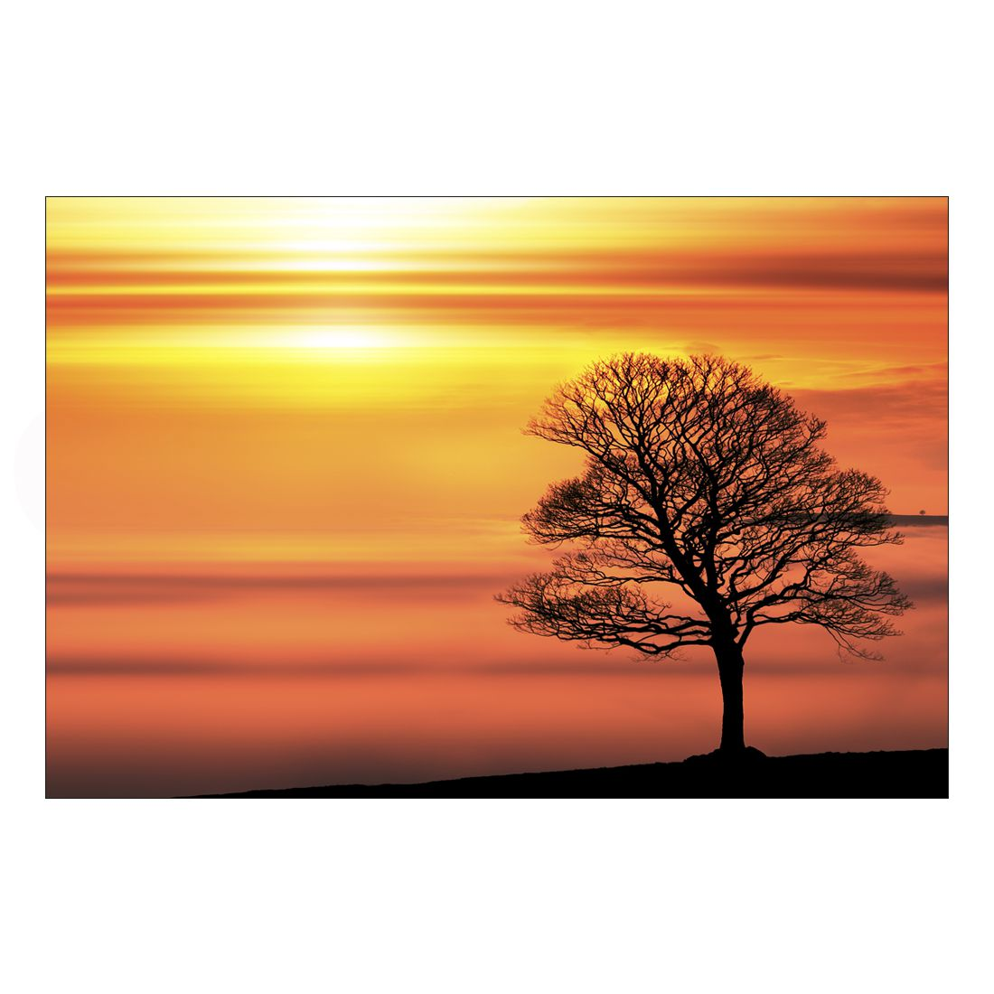 Acrylglasbild Lone Tree – Abmessung 30×20 cm, Gallery of Innovative Art günstig kaufen