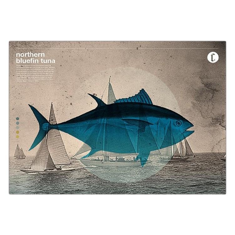 Acrylglasbild Northern Bluefin von Chase Kunz – Größe: A4 (21 x 30 cm), Juniqe günstig kaufen