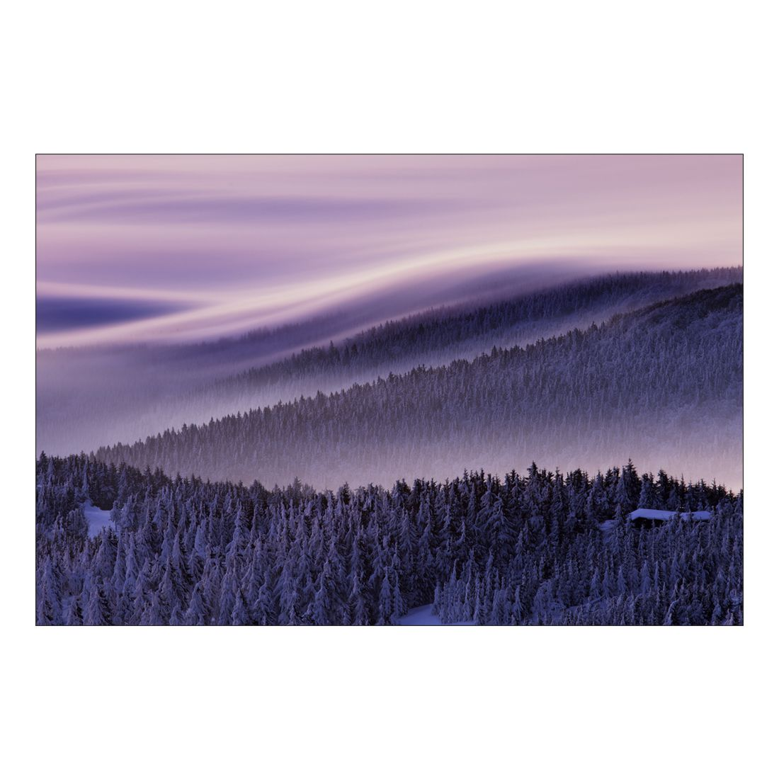Acrylglasbild Pine Forest in Snow – Abmessung 60×40 cm, Gallery of Innovative Art günstig