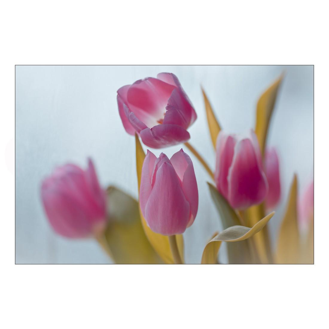 Acrylglasbild Pink Tulpis – Abmessung 60×40 cm, Gallery of Innovative Art günstig bestellen