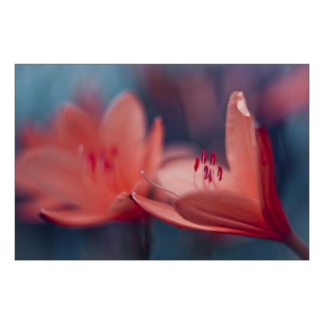 Acrylglasbild Red Flower Petals – Abmessung 90×60 cm, Gallery of Innovative Art online kaufen