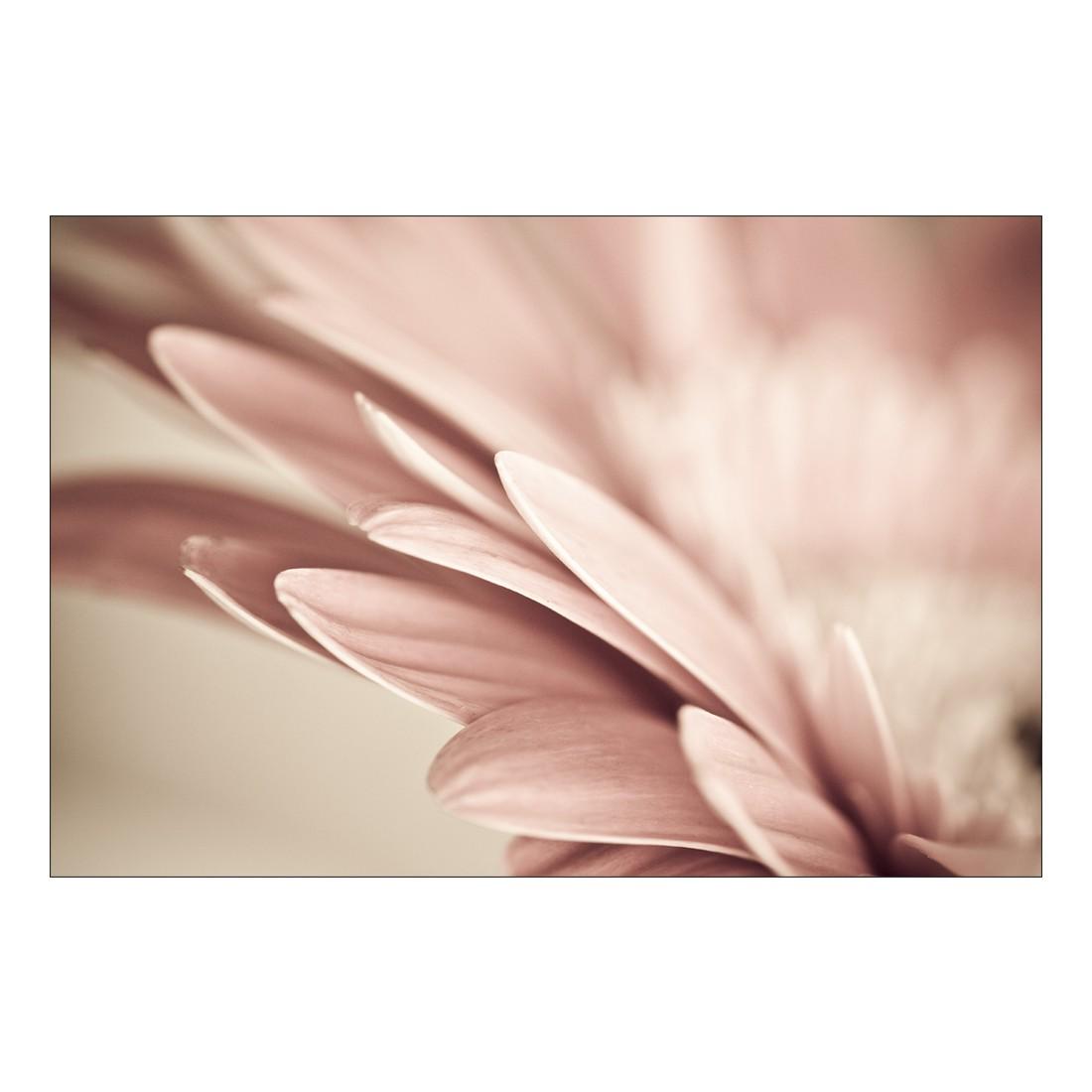Acrylglasbild Retro Flower – Abmessung 30×20 cm, Gallery of Innovative Art bestellen