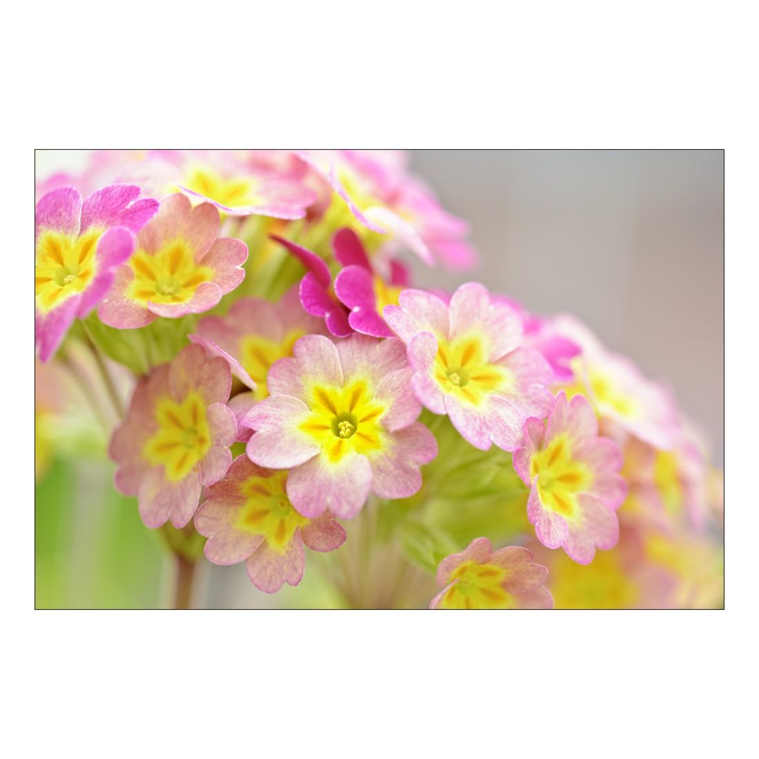 Acrylglasbild Sunny Flowers – Abmessung 75×50 cm, Gallery of Innovative Art jetzt bestellen