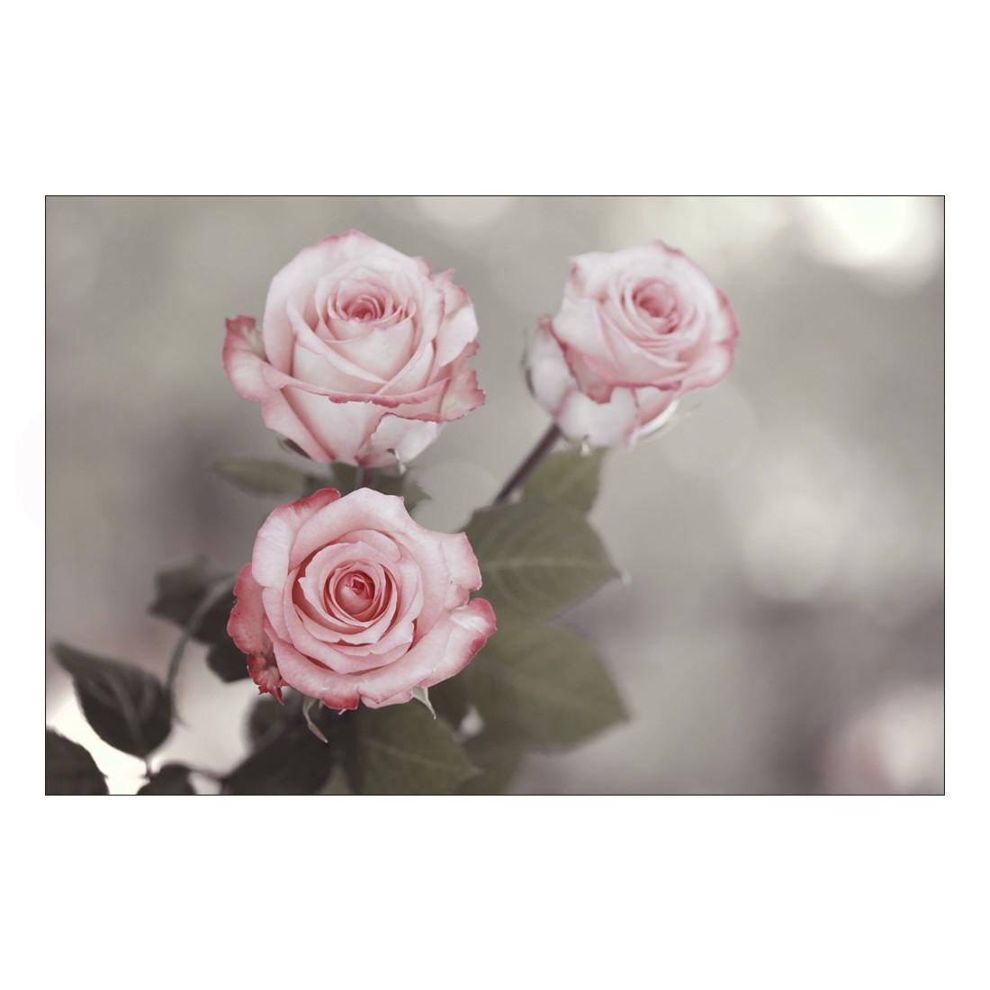 Acrylglasbild Three Roses – Abmessung 30×20 cm, Gallery of Innovative Art jetzt kaufen