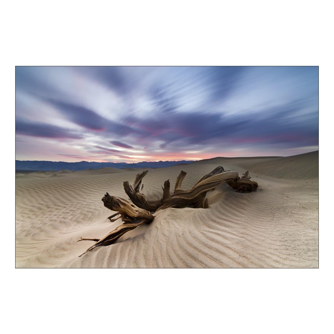 Acrylglasbild Tree Trunk in Desert – Abmessung 75×50 cm, Gallery of Innovative Art online kaufen