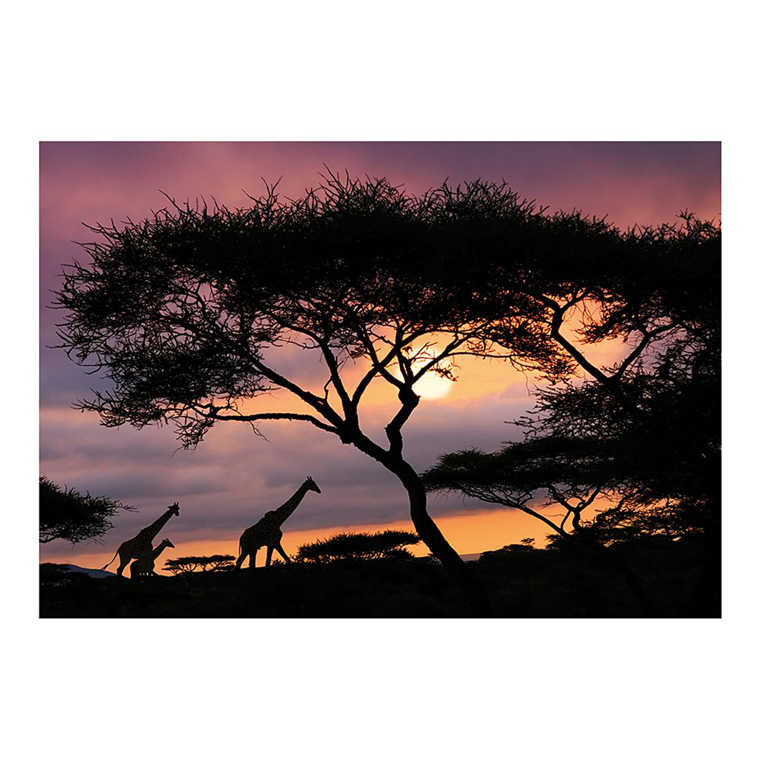 Fototapete African Safari, Mantiburi bestellen