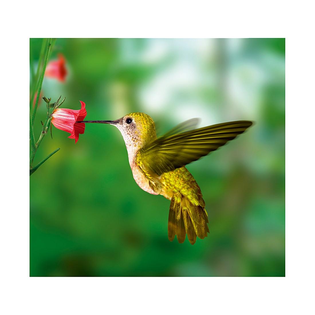 Fototapete Yellow Hummingbird, Mantiburi günstig bestellen