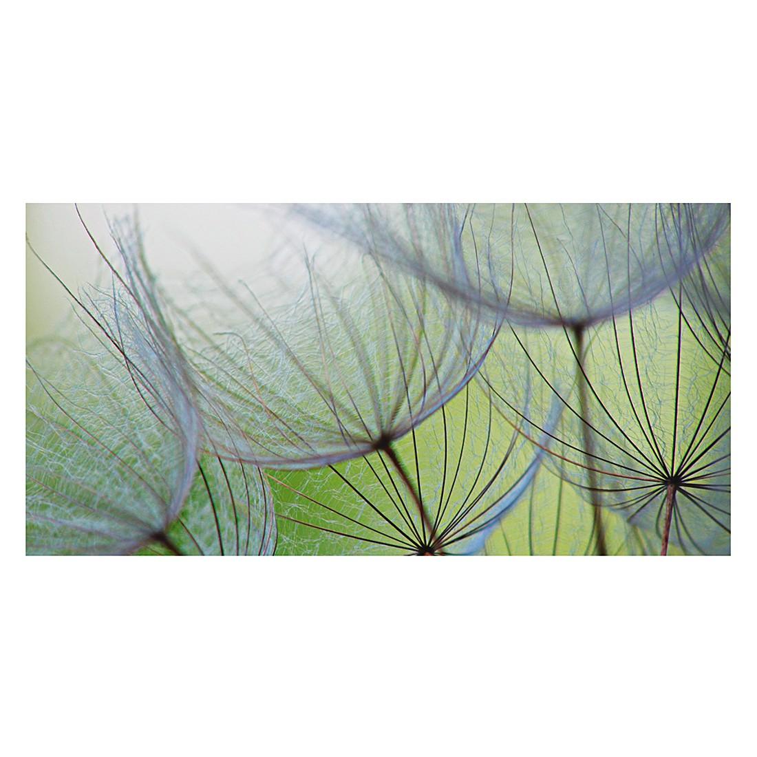 Glasbild Dandelion Seed – Größe: 50 x 100 cm, Artland online kaufen