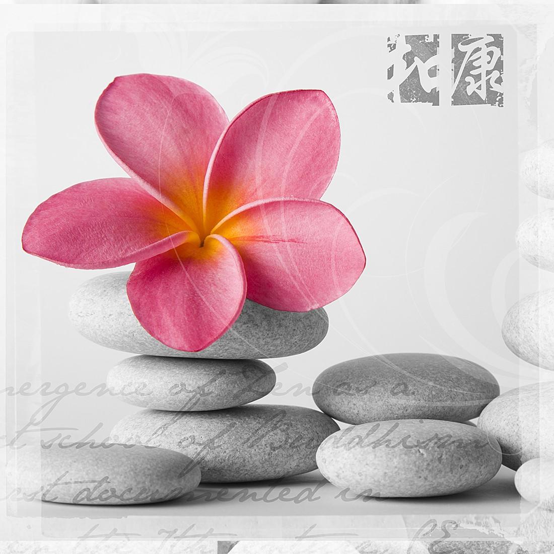 Glasbild Frangipani Pink II 20×20, Pro Art online bestellen