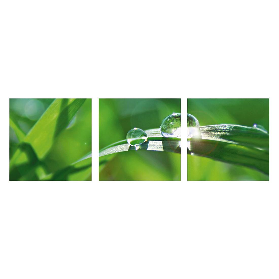 Glasbild Green Background With Grass (3er-Set) – Größe: 30 x 30 cm, Artland bestellen