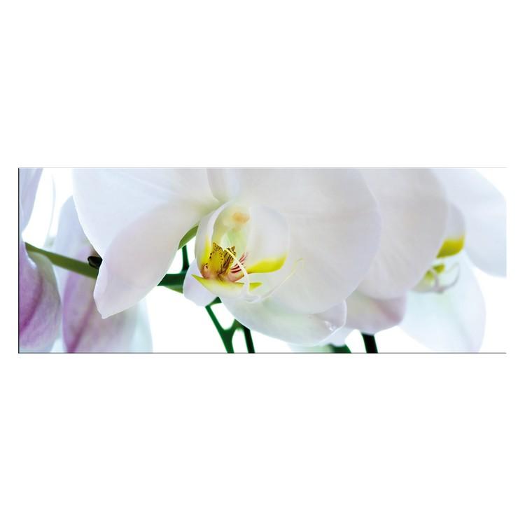 glasbild orchidee sonstige preisvergleiche erfahrungsberichte und kauf bei nextag. Black Bedroom Furniture Sets. Home Design Ideas