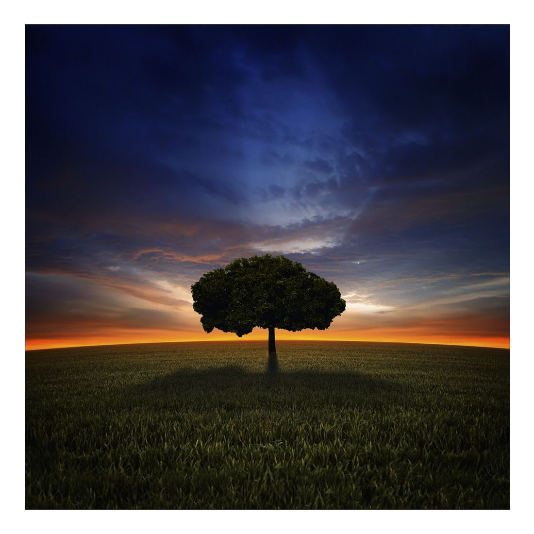Leinwandbild MYSTICAL TREE ON FIELD – Abmessung 100 x 50 cm, Gallery of Innovative Art günstig online kaufen