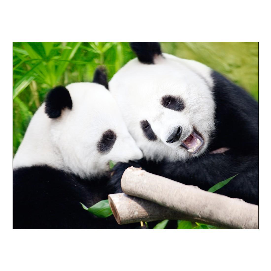Leinwandbild Pandas – 100 x 75cm, Gallery of Innovative Art kaufen
