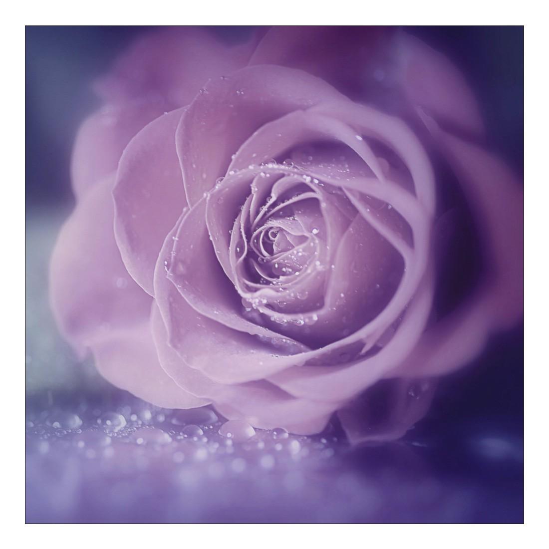 Leinwandbild PINK WET MACRO ROSE – Abmessung 100 x 50 cm, Gallery of Innovative Art günstig online kaufen