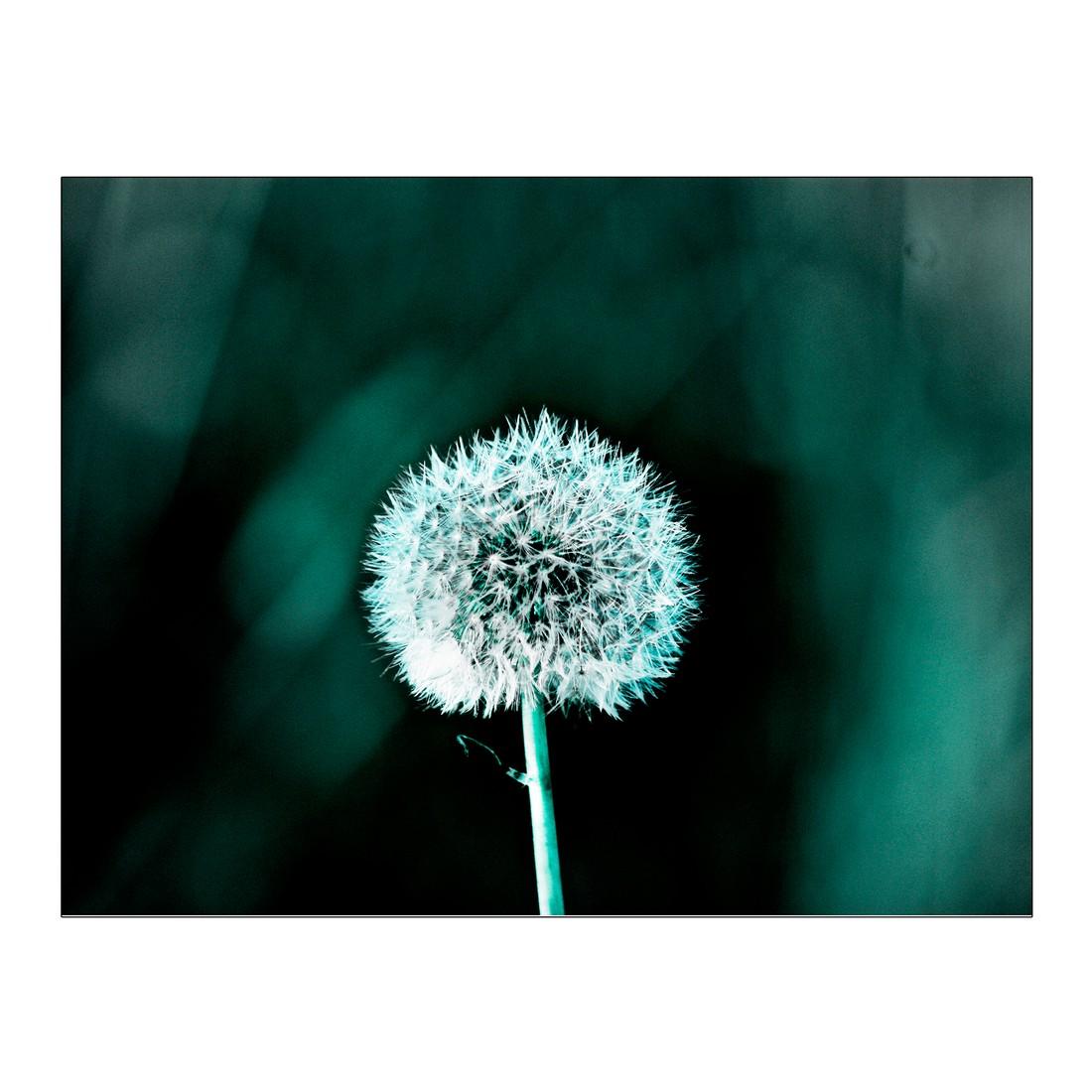 Leinwandbild Pusteblume – 100×75 cm, Gallery of Innovative Art günstig
