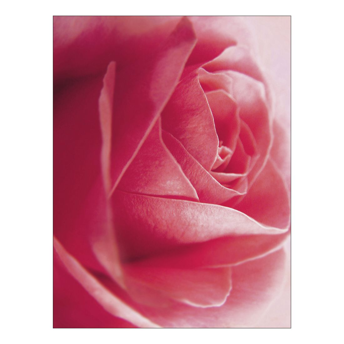 Leinwandbild Rose – 100 x 75cm, Gallery of Innovative Art günstig online kaufen