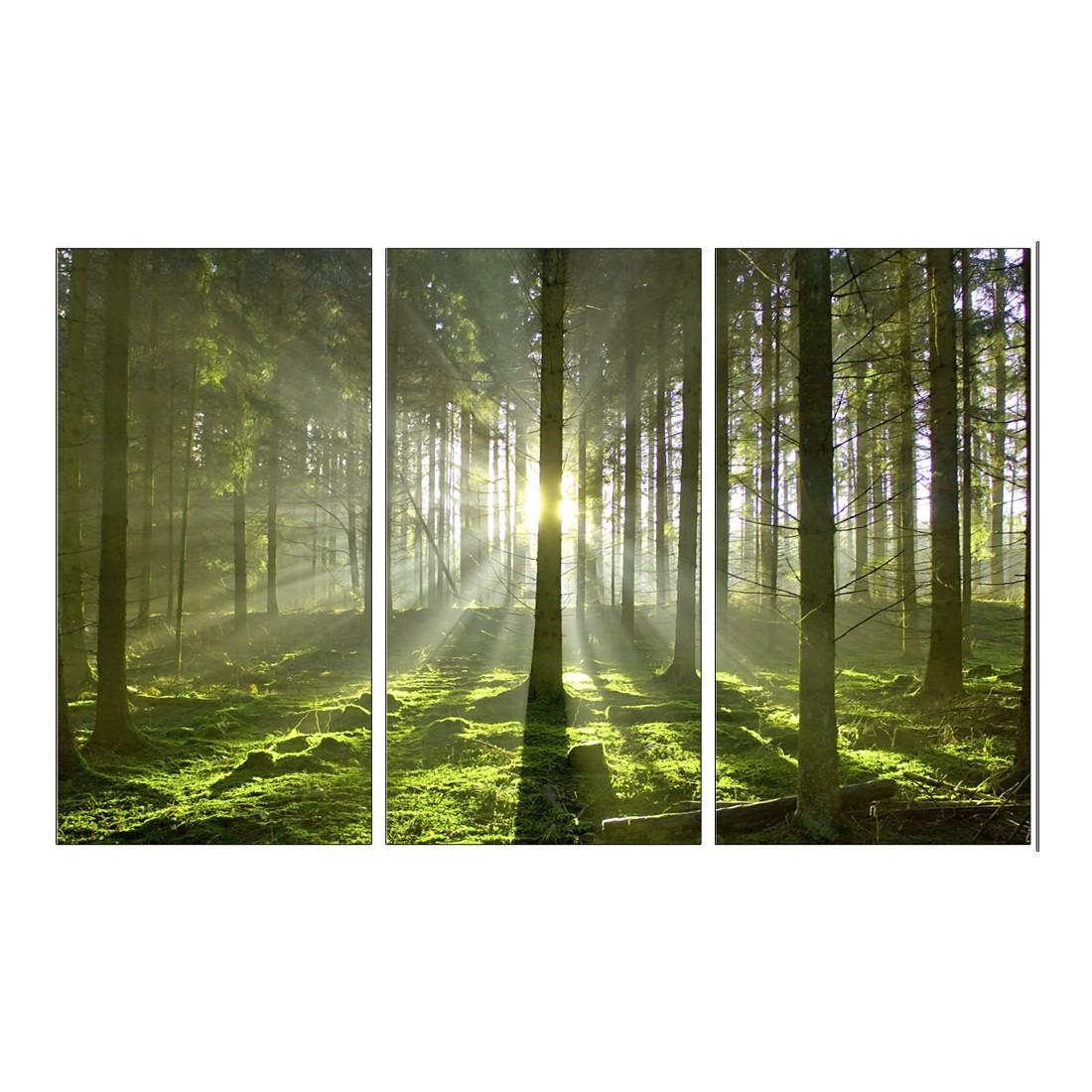 Leinwandbild Wald – 120 x 80cm, Gallery of Innovative Art kaufen