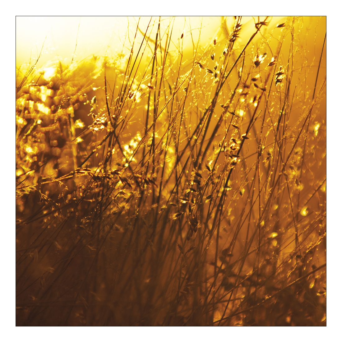 Leinwandbild YELLOW SUNRISE IN THE FIELDS – Abmessung 100 x 75 cm, Gallery of Innovative Art jetzt kaufen