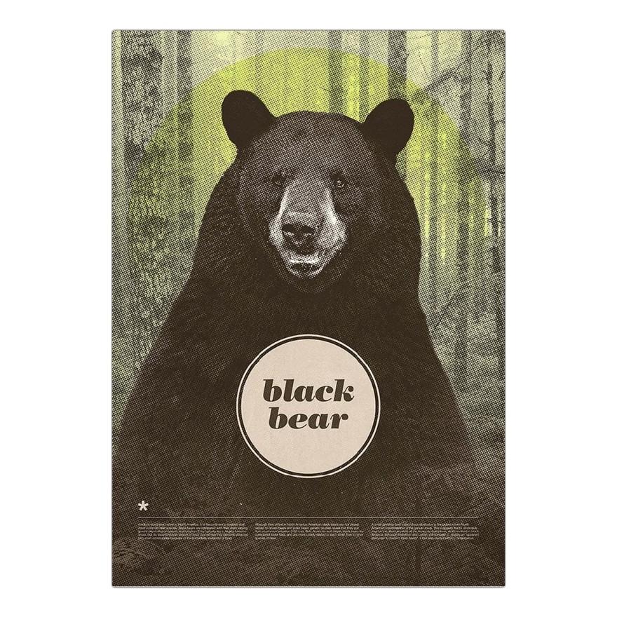 Leinwanddruck Black Bear von Chase Kunz – Größe: A3 (42 x 30 cm), Juniqe kaufen