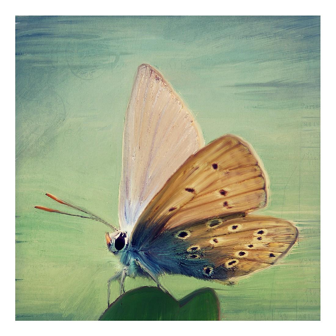 Ölgemälde Little Butterfly von Angela Dölling – Größe 50 x 50 cm, yourPainting günstig kaufen