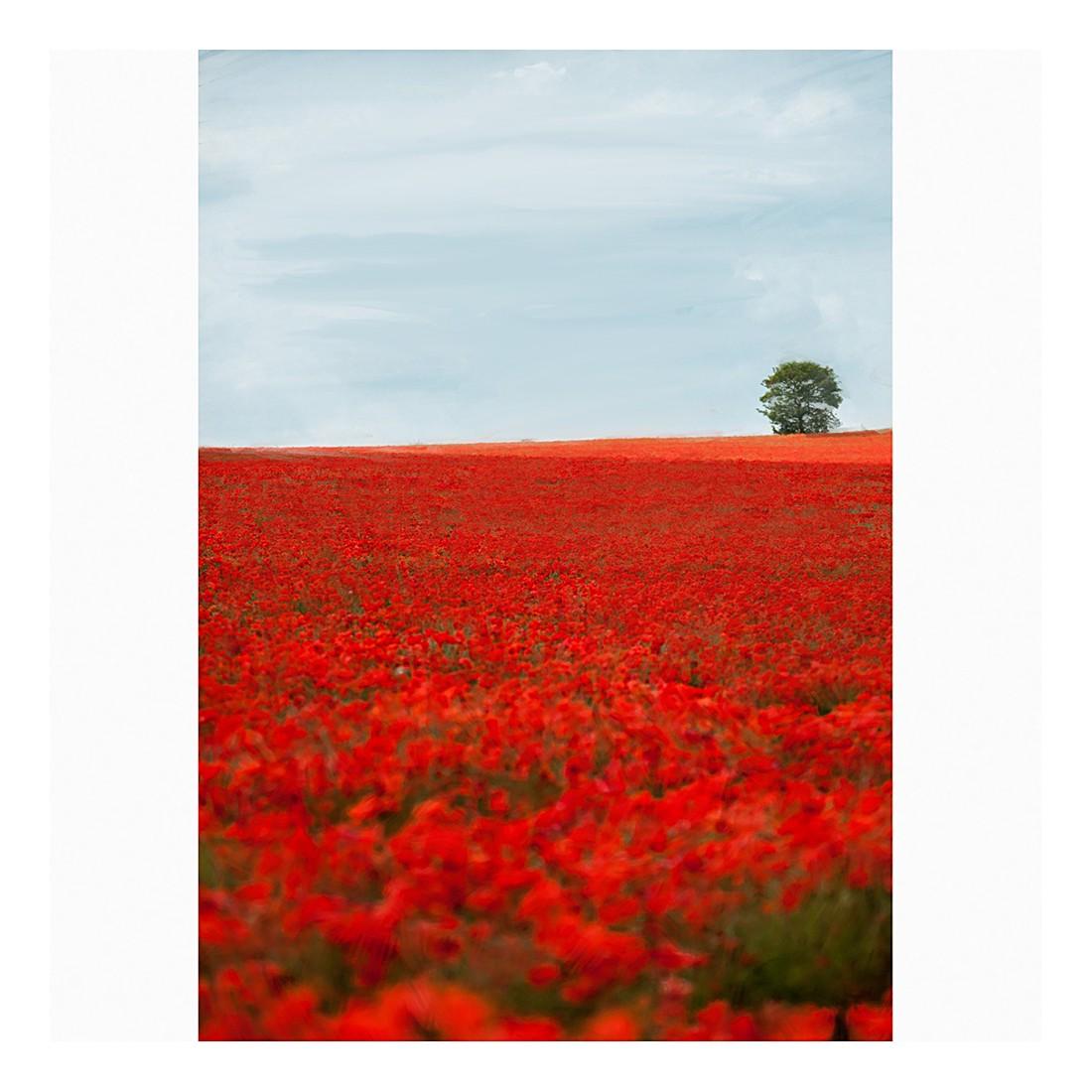 Ölgemälde Poppyfield – Größe 80 x 60 cm, yourPainting kaufen