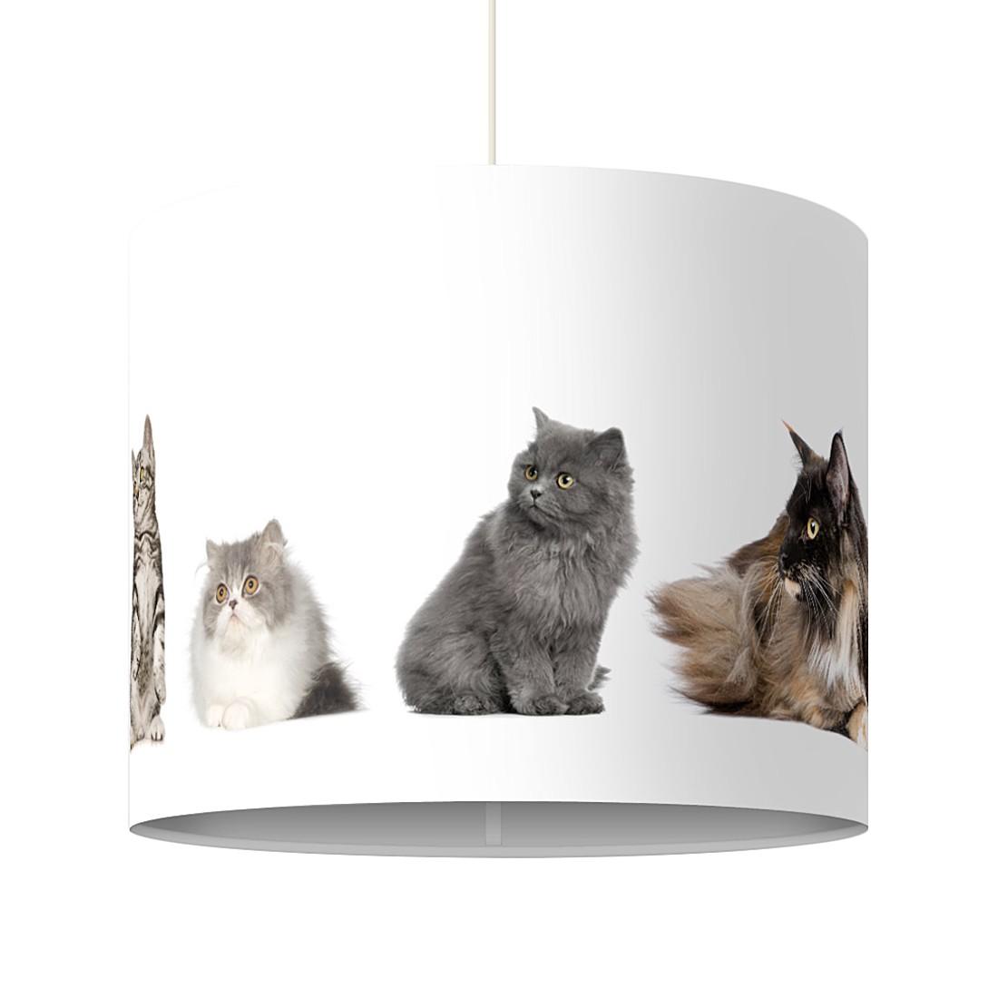 Pendelleuchte Katzenbande, Mantiburi