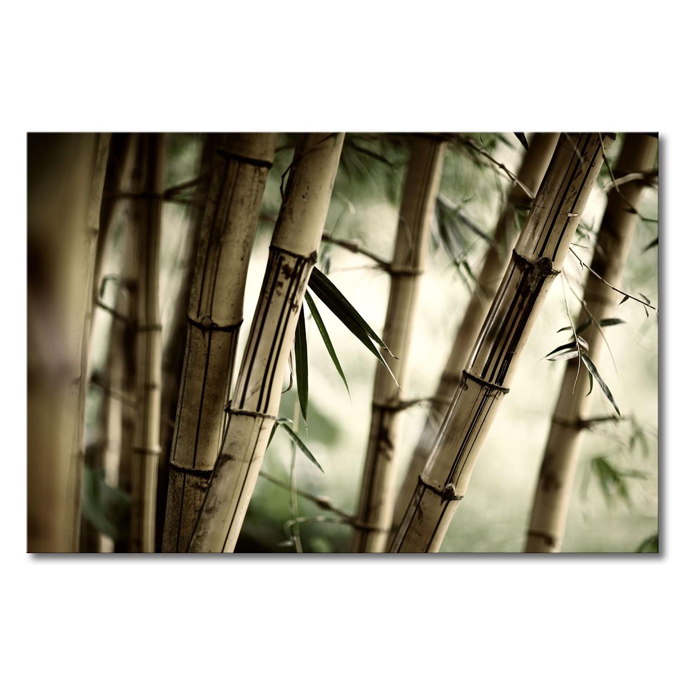 Foto op canvas Bamboo Forest - canvas - beige/groen, Wandbilder XXL